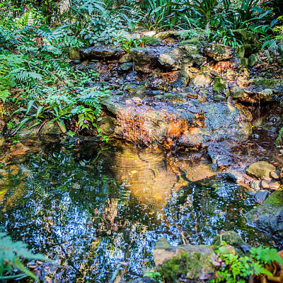 Photograph - Reflections by Louis Ferreira