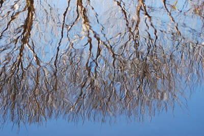 Photograph - Reflections by Ramona Whiteaker