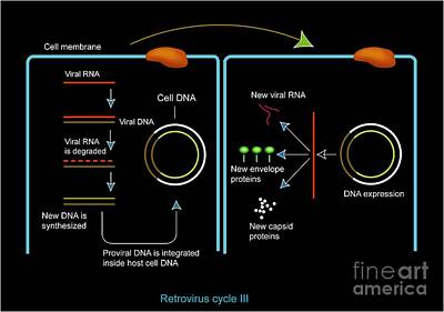 Retrovirus Genome Replication, Artwork Art Print by Francis Leroy, Biocosmos