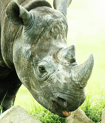 Photograph - Rhino by Shaun Wilkinson