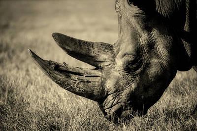Photograph - Rhino by Unsplash