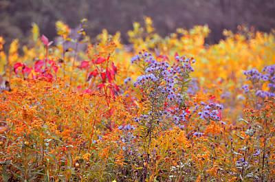 Photograph - Rich Autumn Colors by JAMART Photography