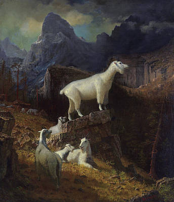 Mountain Goat Drawing - Rocky Mountain Goats by Celestial Images