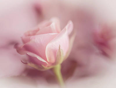 Photograph - Romance by Cindy Grundsten