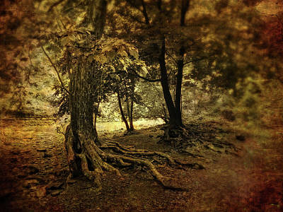 Tree Roots Photograph - Rooted In Nature by Jessica Jenney