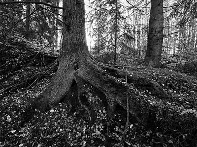 Photograph - Roots by Jouko Lehto