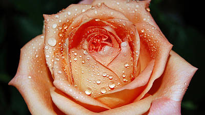Floral Digital Art - Rose by Maye Loeser