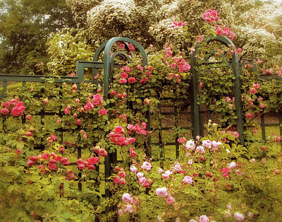 Rose Trellis  Art Print by Jessica Jenney