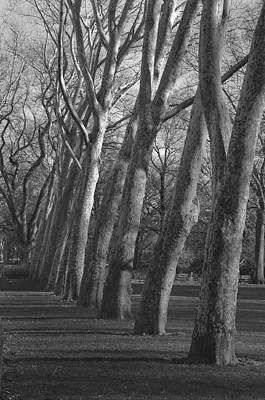 Photograph - Row Trees by Henri Irizarri