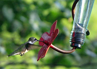 Photograph - Ruby-throated Hummingbird by Richard Nickson
