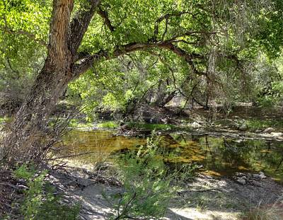 Photograph - Sabino Canyon by Anne Sands