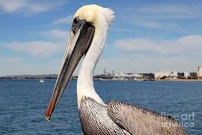 Photograph - San Diego Pelican by Henrik Lehnerer