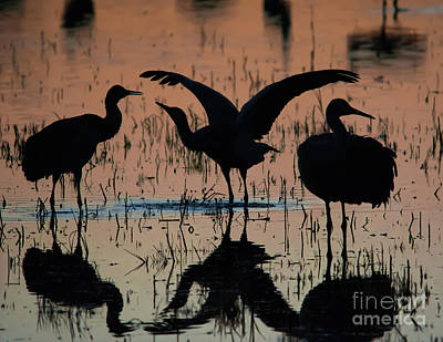 Sandhill Cranes At Sunset  Art Print