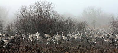 Photograph - Sandhill Cranes And The Fog by Farol Tomson