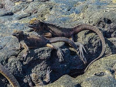 Santiago Marine Iguana Art Print by Harry Strharsky