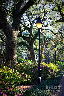 Photograph - Savannah Spring Perspective by Carol Groenen