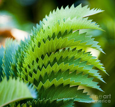 Clouds Royalty Free Images - Sawtooth Leaves Royalty-Free Image by Rich Governali