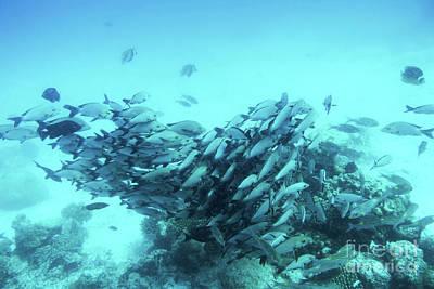 Photograph - School Of Fish Fish In Indian Ocean, Maldives. by Michal Bednarek