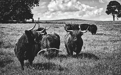 Photograph - Scottish Highland Cattle by Pixabay