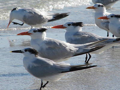 Sanibel Island Painting - Sea Birds Sanibel Island by Deborah Martin