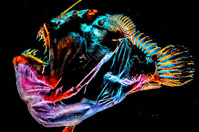 Animals Photograph - Sea Creatures by Jijo George