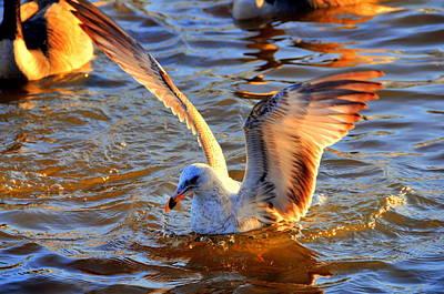 Sea Eagle Original