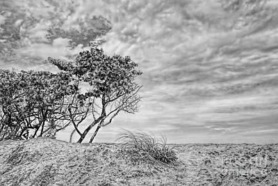 Photograph - Seagrape by Olga Hamilton