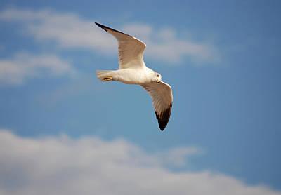 Photograph - 2- Seagull by Joseph Keane