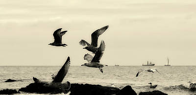 Photograph - Seagulls Over The North Sea by Pixabay