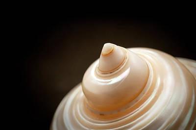 Photograph - Seashell by Fabrizio Troiani