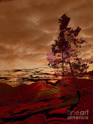 Photograph - Sechelt Tree 2 by Elaine Hunter