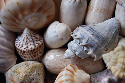 Claude Monet - She Sells Seashells By The Seashore by Sheryl Chapman Photography