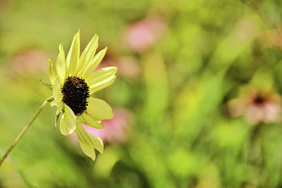 Photograph - Simply Daisy by JAMART Photography