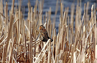 Photograph - Sing A Song by Debbie Oppermann