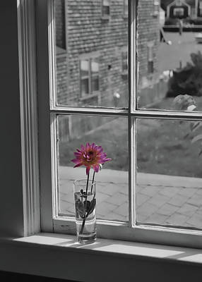 Photograph - Single Flower Bud by JAMART Photography
