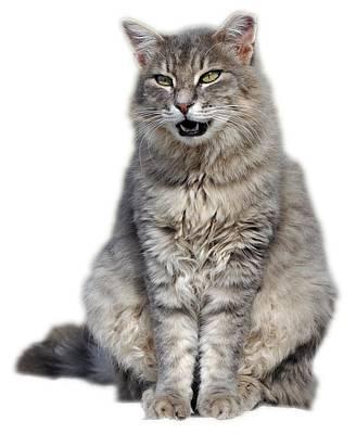 Greek Photograph - Sitting Cat by George Atsametakis