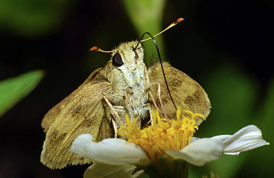 Photograph - Skipper by Larah McElroy