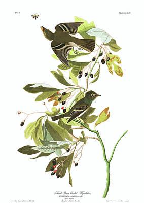 Flycatcher Wall Art - Painting - Small Green Crested Flycatcher by John James Audubon