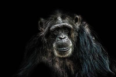 Chimpanzee Photograph - Smile by Martin Newman