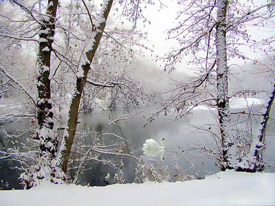 Photograph - Snow Swan by Jessica Jenney