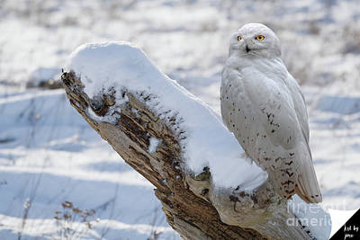 Art Print featuring the photograph Snowy Owl by Jim  Hatch