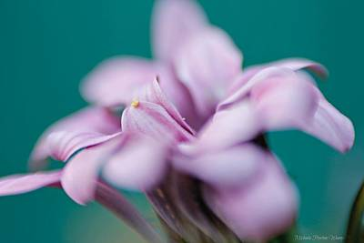 Photograph - Soft Pink by Michaela Preston