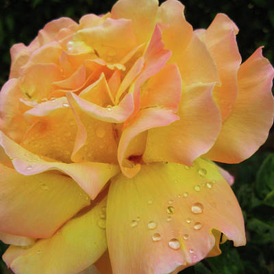 Photograph - Spanish Rose by JAMART Photography