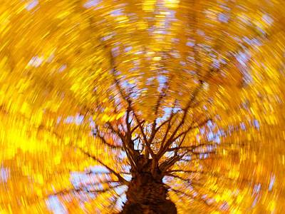 Photograph - Spinning Maple by Bernhart Hochleitner