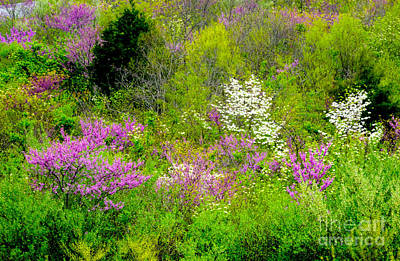 Photograph - Spring At Devils Den by Paul W Faust - Impressions of Light