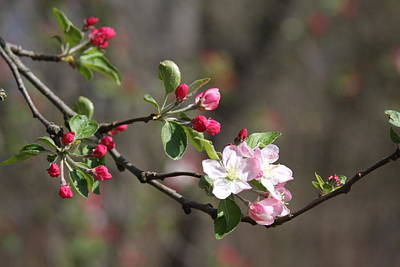 Photograph - Blossom And Hope by Vadim Levin