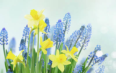 Photograph - Spring Bluebells And Daffodils by Anastasy Yarmolovich