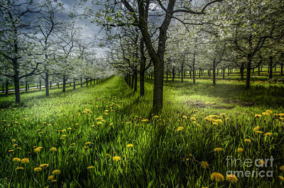 Photograph - Spring Colors by Bruno Santoro