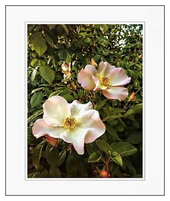 Photograph - Spring by Leslie Hunziker