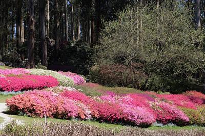 Photograph - Spring by Masami IIDA